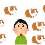 【症状】飼ったらモルモットアレルギーだった話【対策】鼻水&目が痒い等